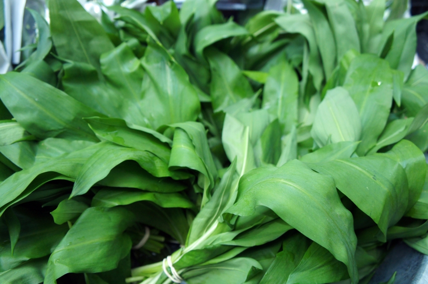 Beautiful wild garlic leaves. Photo by Simon Wilder